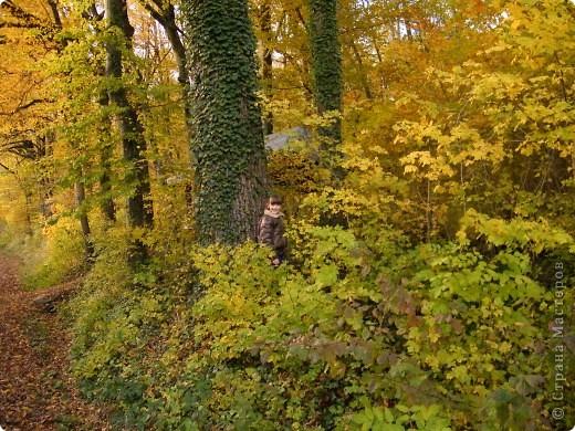 Отправляемся на прогулку в лес!  первая фотоостановка недалеко от дома. Вот такая красочная плетущаяся стена находтся на нашей улице! фото 19