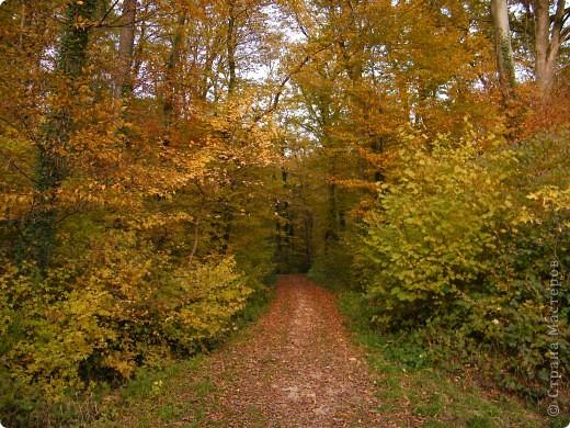 Отправляемся на прогулку в лес!  первая фотоостановка недалеко от дома. Вот такая красочная плетущаяся стена находтся на нашей улице! фото 18