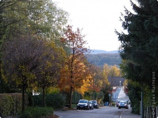 Отправляемся на прогулку в лес!  первая фотоостановка недалеко от дома. Вот такая красочная плетущаяся стена находтся на нашей улице! фото 23