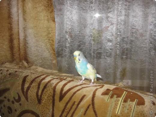 Попугайчики фото 3