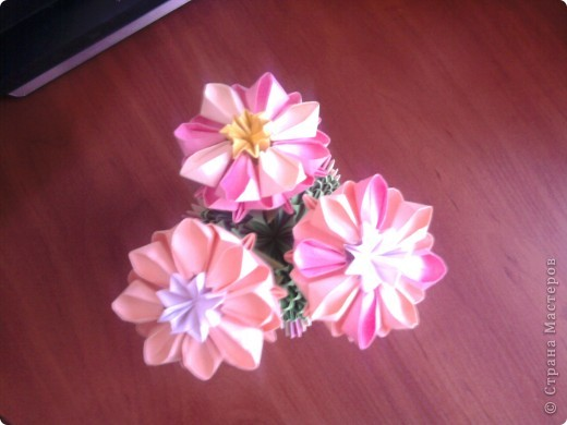 Цветущий кактус:)) фото 1