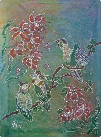 Попугаи фото 1