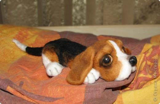 щенок  фото 2
