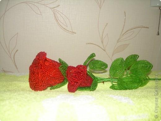 А роза упала на лапу Азора фото 1