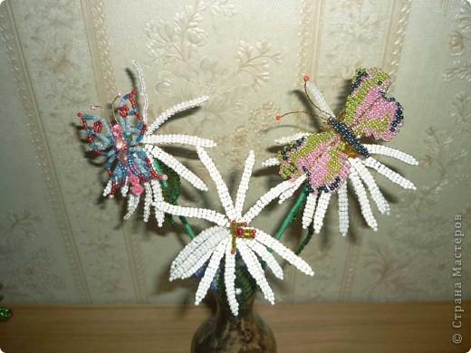 Бабочки на ромашках фото 1