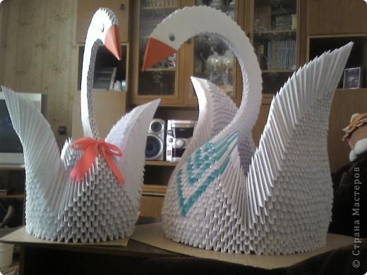 Это мои лебеди))) фото 1