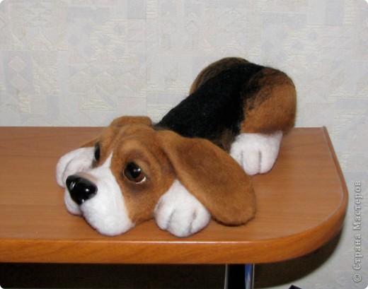 еще парочка войлочный псов фото 4