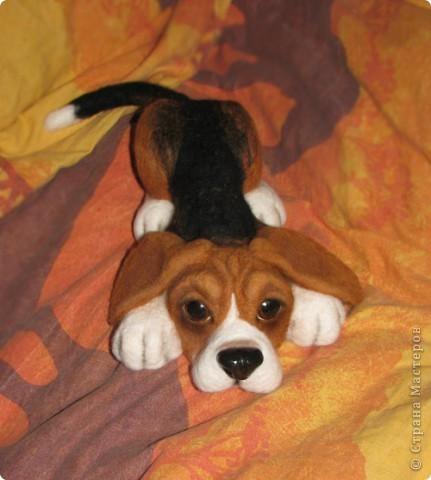 еще парочка войлочный псов фото 5