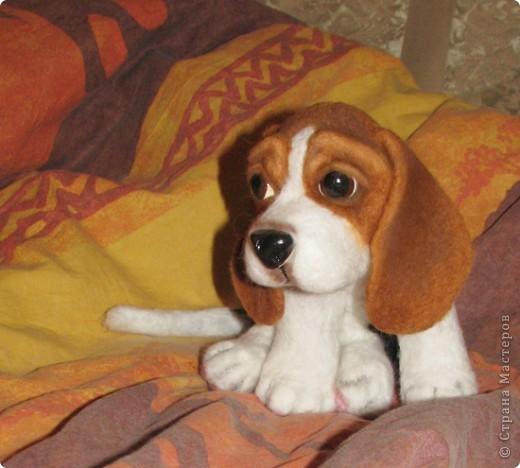 еще парочка войлочный псов фото 2