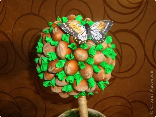фундук-дерево фото 3