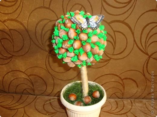 фундук-дерево фото 1
