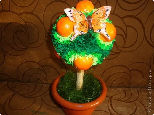 апельсиновое деревце фото 1