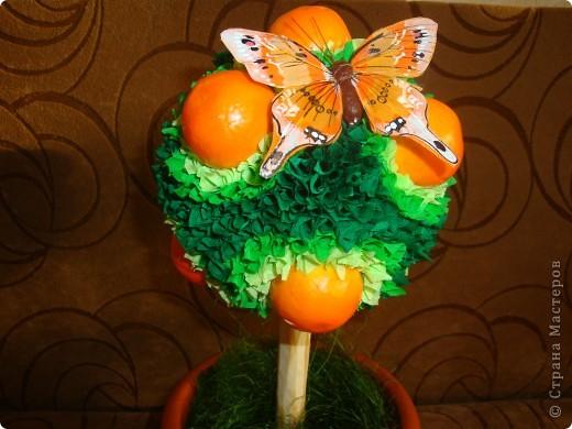 апельсиновое деревце фото 3
