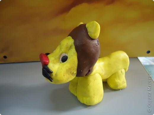 Лев -  во всей своей красе фото 2