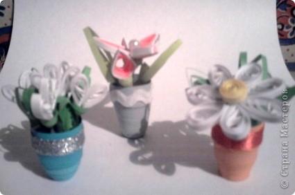 Здесь у меня и розы фото 5