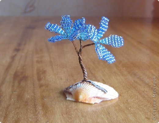Деревце на ракушке.