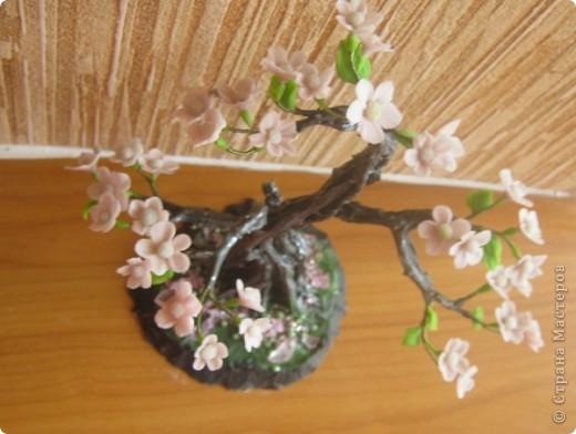 Цветущий бонсай.МК фото 15