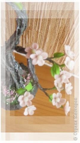 Цветущий бонсай.МК фото 16