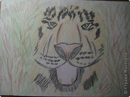 наши тигры... фото 2