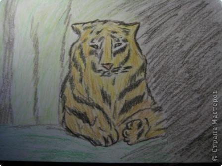 наши тигры... фото 1