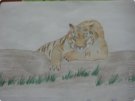 наши тигры... фото 7