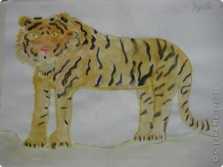 наши тигры... фото 9