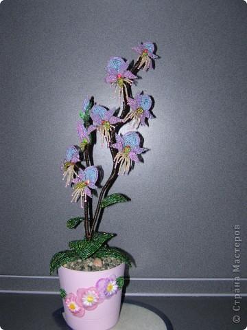 Орхидея в подарок фото 1