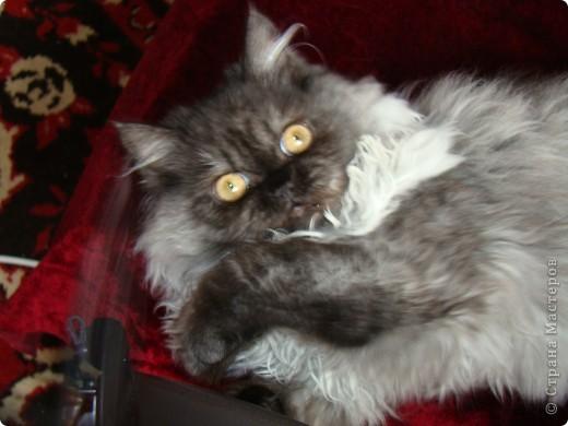 Кот Шатц фото 3