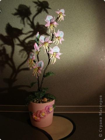 Орхидея в подарок фото 2