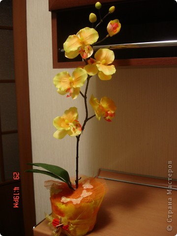 У меня теперь тоже есть орхидея))))) фото 1