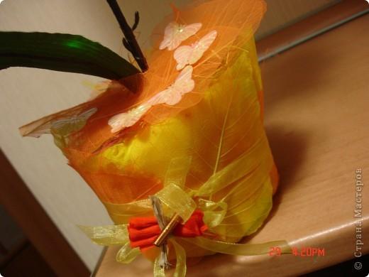 У меня теперь тоже есть орхидея))))) фото 2