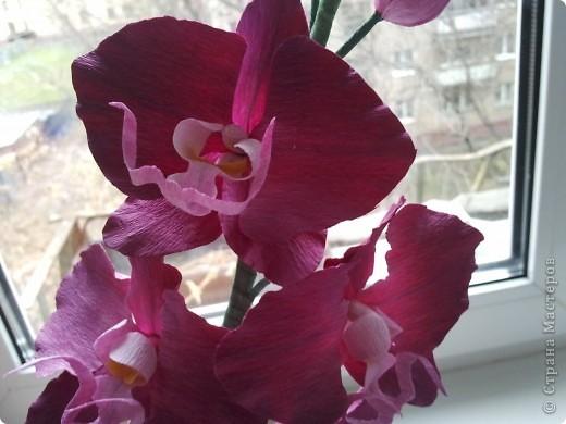 орхидея + описание фото 3