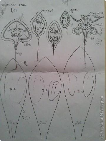орхидея + описание фото 2