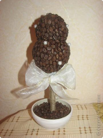 Кофейное дерево... фото 1
