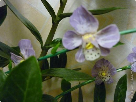 Орхидеи. фото 1