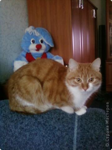 А я, к вам с котиком))) фото 6
