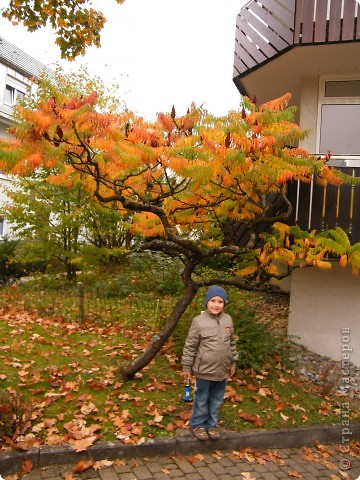 Осень фото 6