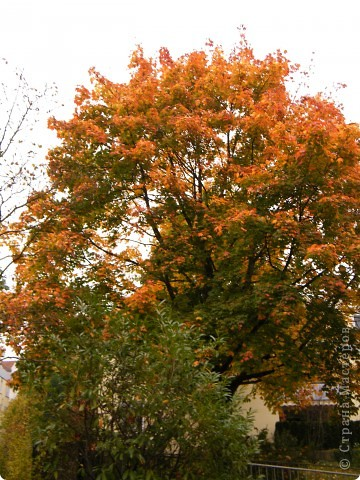 Осень фото 7