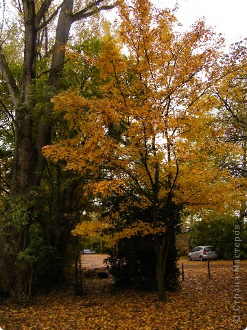 Осень фото 11