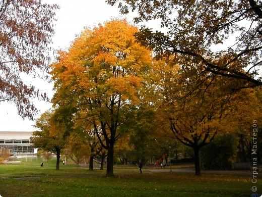 Осень фото 15