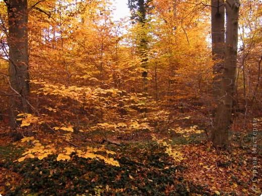 Осень фото 42