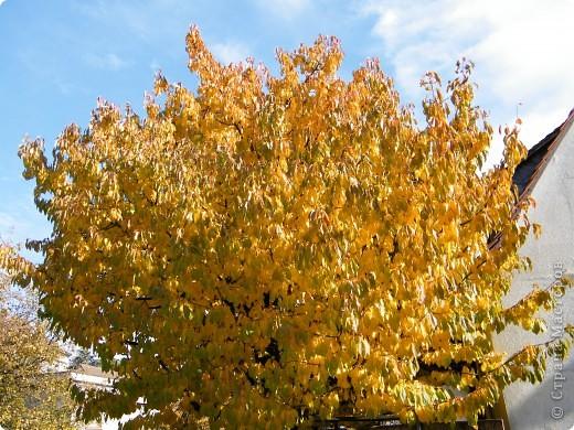 Осень фото 19