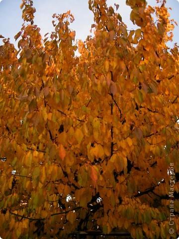 Осень фото 20