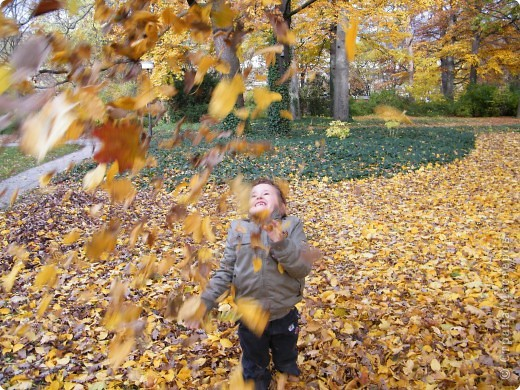 Осень фото 31
