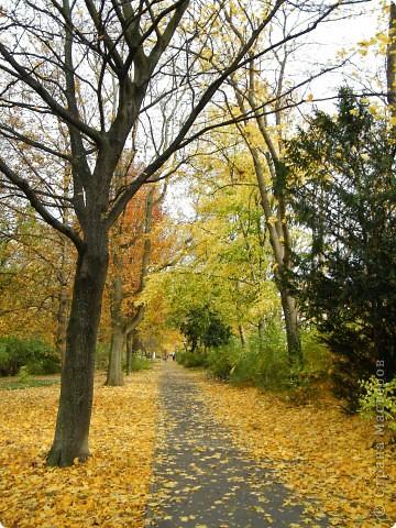 Осень фото 33