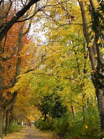 Осень фото 34
