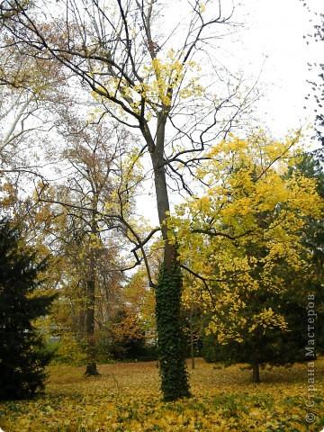 Осень фото 36