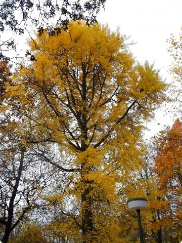Осень фото 37