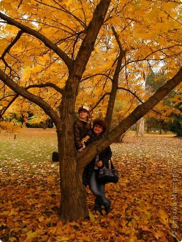 Осень фото 38