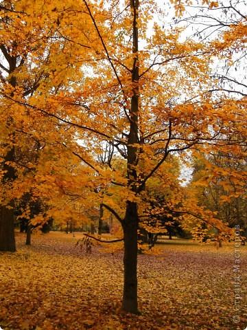 Осень фото 39